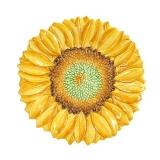 Talíř slunečnice dezertní 22cm